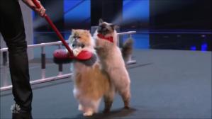 Savitsky Cats Broom Upright