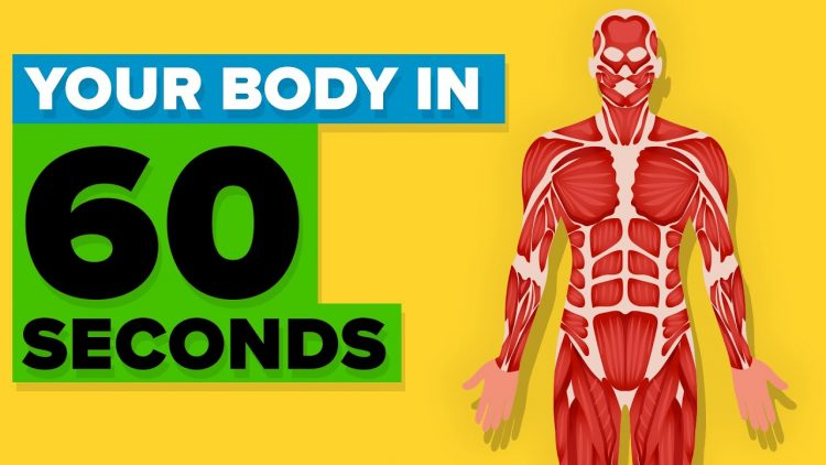 A Fascinating List of Autonomic Functions That Occur Within Human Bodies Every 60 Seconds