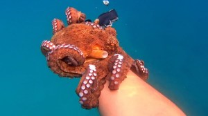 Affectionate Octopus Kevin Filoni