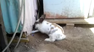 Bunny Digs Out Cat
