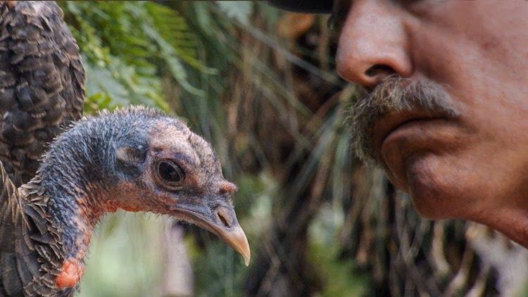 Hutto and Talking Turkey