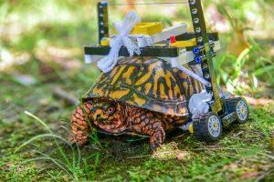 Turtle Wheelchair