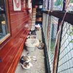 De Poezenboot Cat Boat