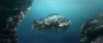 Hybrids-Fish