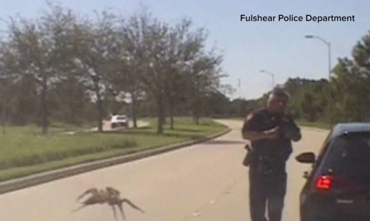 A Seemingly Giant Spider Appears to Cross a Street Towards a Texas Police Officer During a Traffic Stop