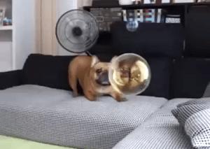Puppy Burst Bubble