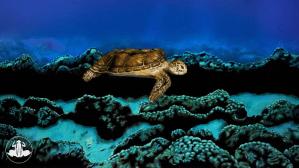 Sea Turtle Johannes Stotter