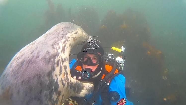 Seal checks diver's mask