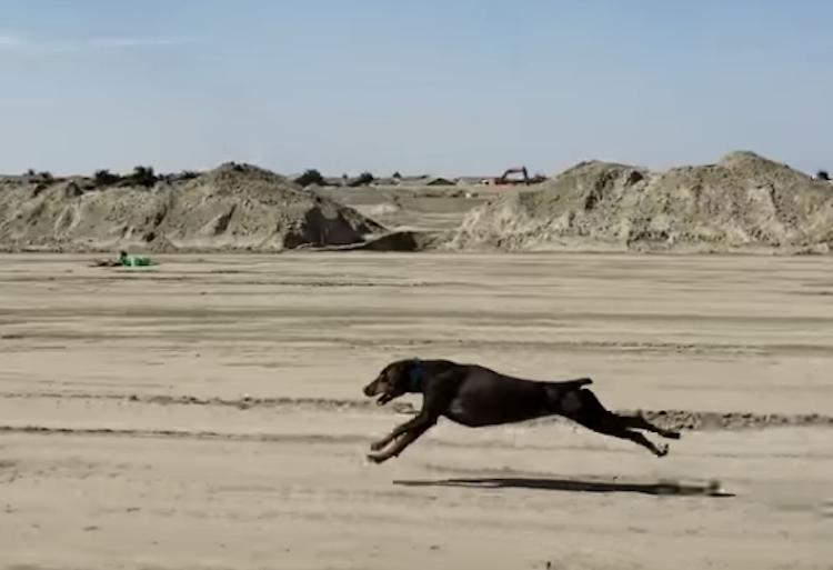 A Fast Doberman Pinscher Gracefully Runs Alongside Her Human's Moving Car at 30 Miles Per Hour