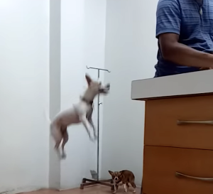 Dog Jumping Up and Down