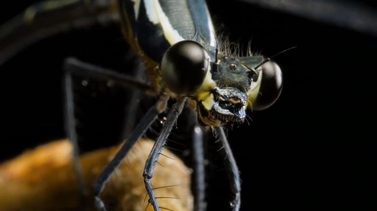 Dragonfly Ze Frank