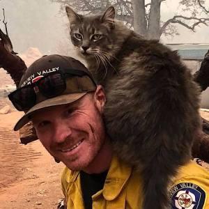 Firefighter Cat Paradise California