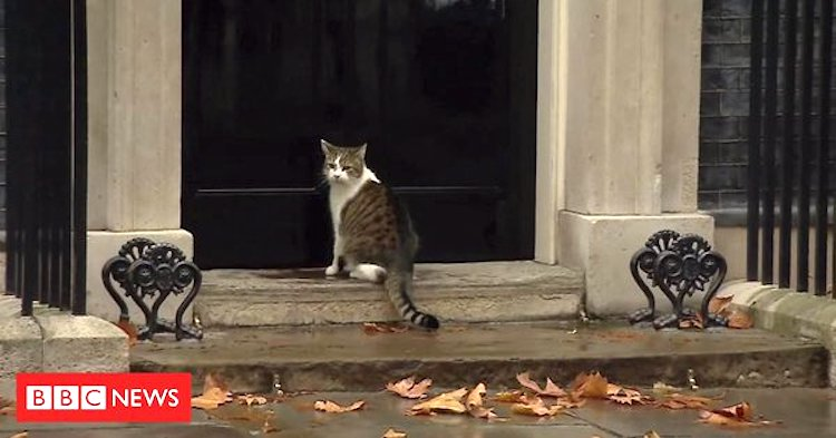 Larry the Cat Convinces Thoughtful Policeman to Open the Door to 10 Downing Street on a Rainy London Day