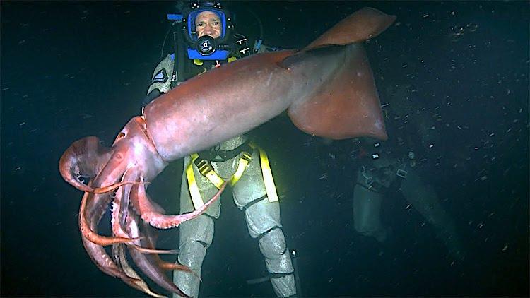 Irritated Humboldt Squid Bites a Persistent Nature Host