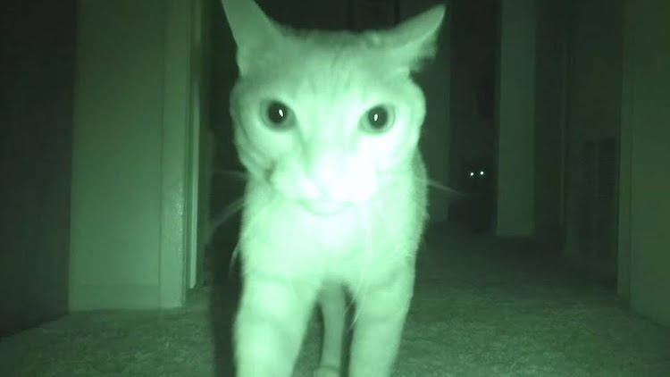 Night Vision Camera Captures How Four Cats Entertain Themselves While Their Humans Are Sleeping at Night