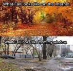 What Fall Looks Like
