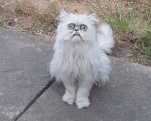 Wilfred the Warrior Cat Michael Rapaport