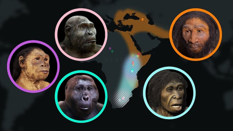 An Animated Timeline of Human Evolution Over Seven Million Years as Determined by Clue Giving Fossils