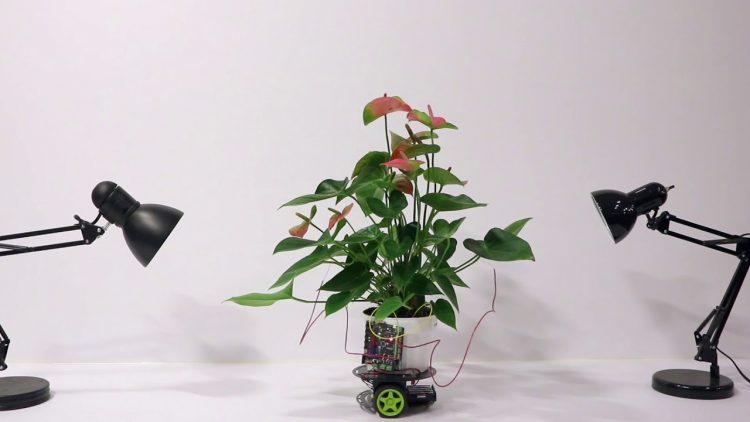 Elowan Hybrid Plant Powered Robot