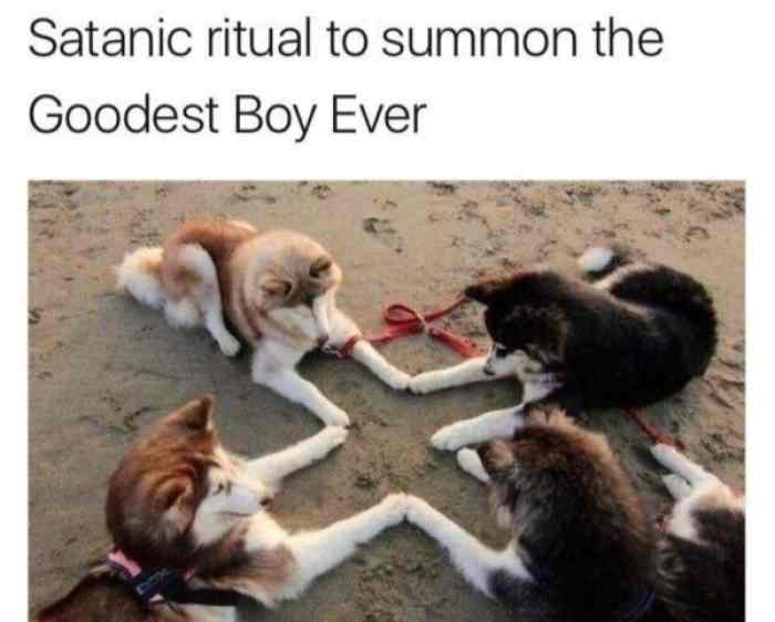 Goodest Boy Ever