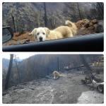 Madison Dog Rescue