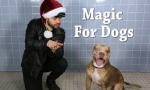 Magic For Dogs