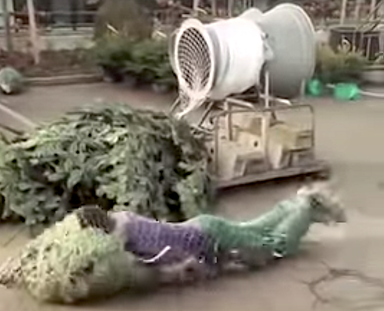 Man Holding Tree Dives Through a Christmas Tree Packaging Machine and Gets Wrapped With the Tree