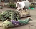 Man Dives Into Christmas Tree Packaging Machine