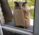 Owl Delivers Letter