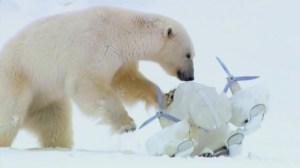 Polar Bear Blizzard Cam BBC Spy in the Snow
