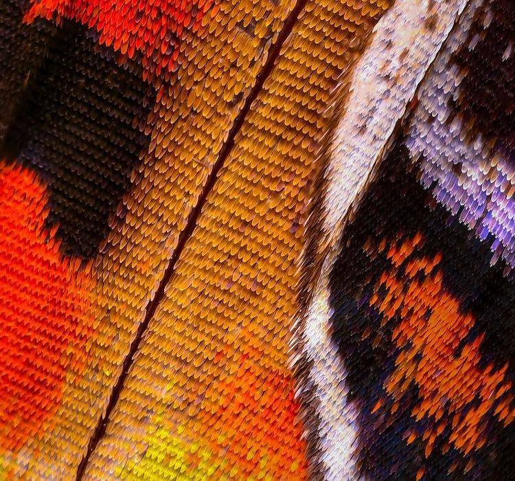 Thousands Microscopic Butterfly Photos Macro Wings