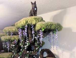 Wolfie Atop Tolkien Cat Tree