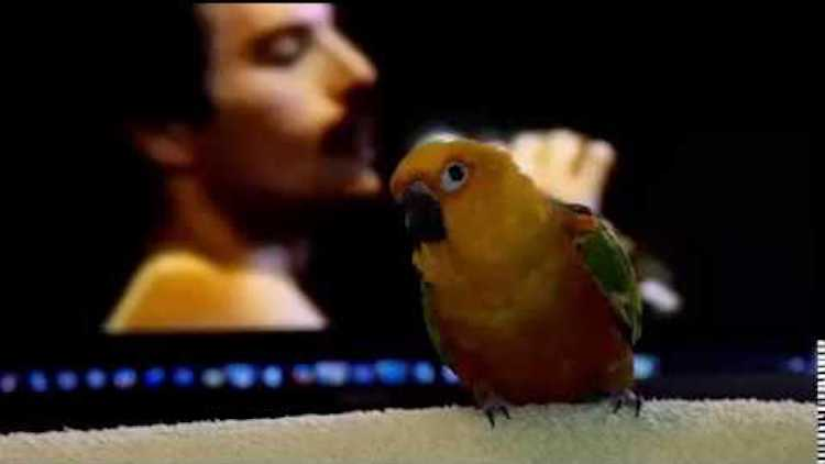 Bird Dances to Freddie Mercury Another One Bites the Dust