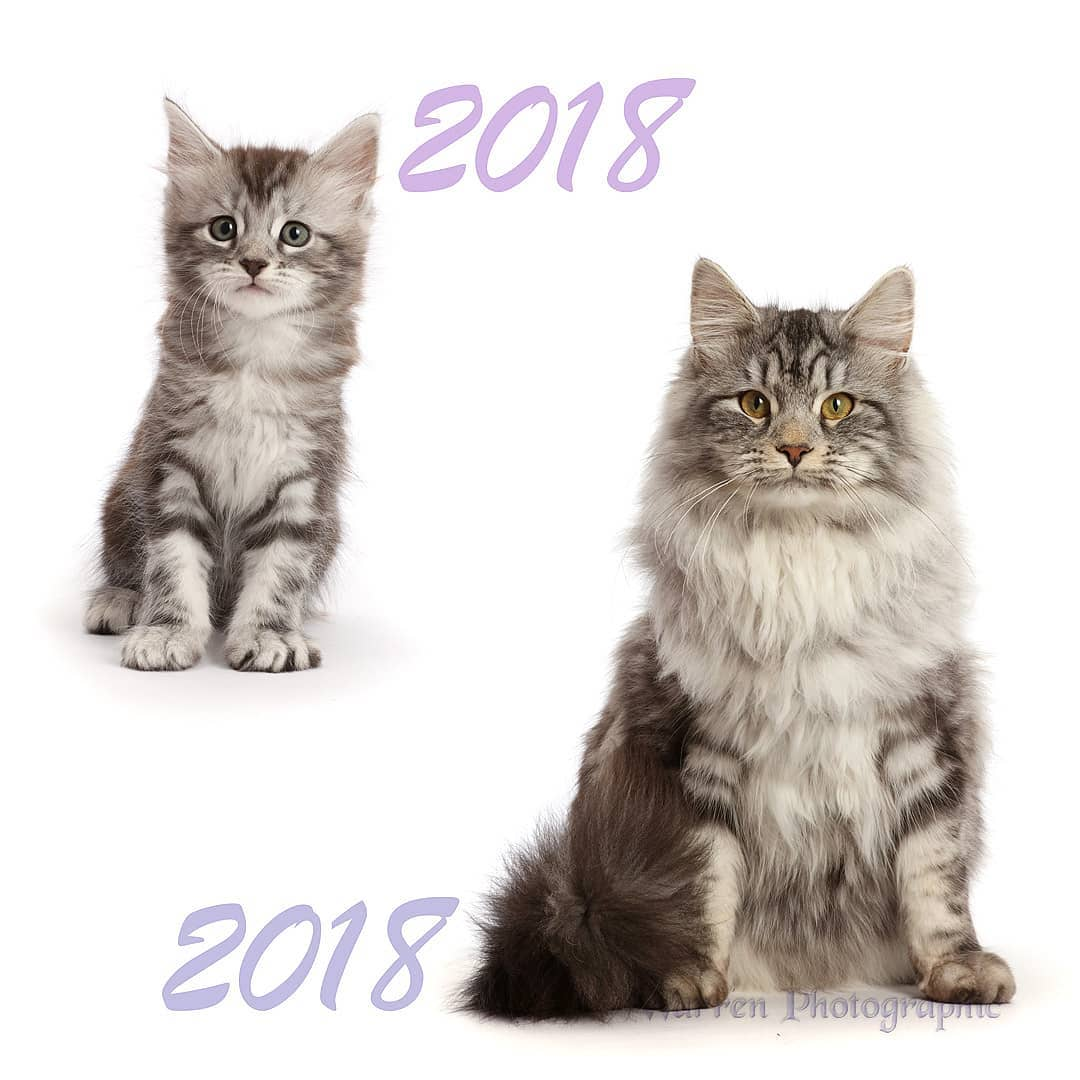 A Tiny Kitten Grows Into a Beautiful Long Haired Cat In a 26 Second Timelapse Taken Over 10 Months
