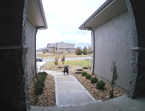 Deer Plays 'Leap Dog' With Family Pet in Kansas