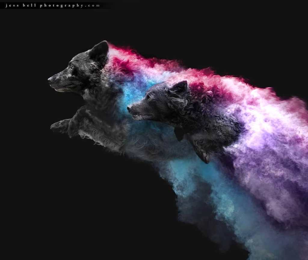 Jess Bell Photography Dogs in Powder