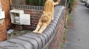 Meet Eric Matt Chats With Cats