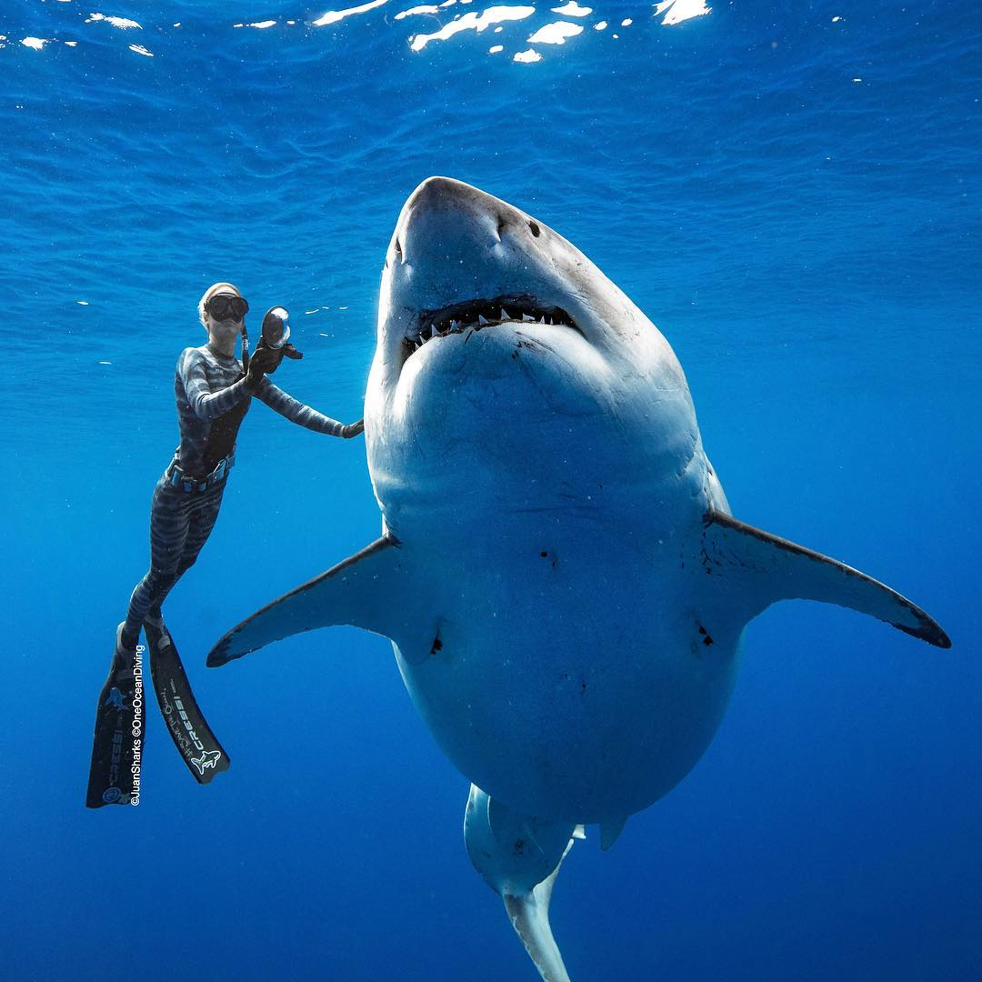 Diver Ocean Ramsey Swims With 'Deep Blue', One of the