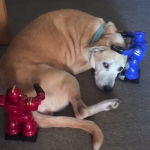 Robots Help the Dog Relax