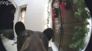 Wayward Bear Rings Video Doorbell