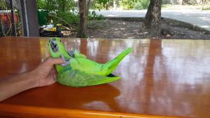 Amazing Acrobat Parrot Somersault Trick