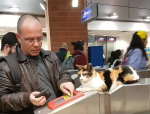Cat Watches Train Passes Being Scanned