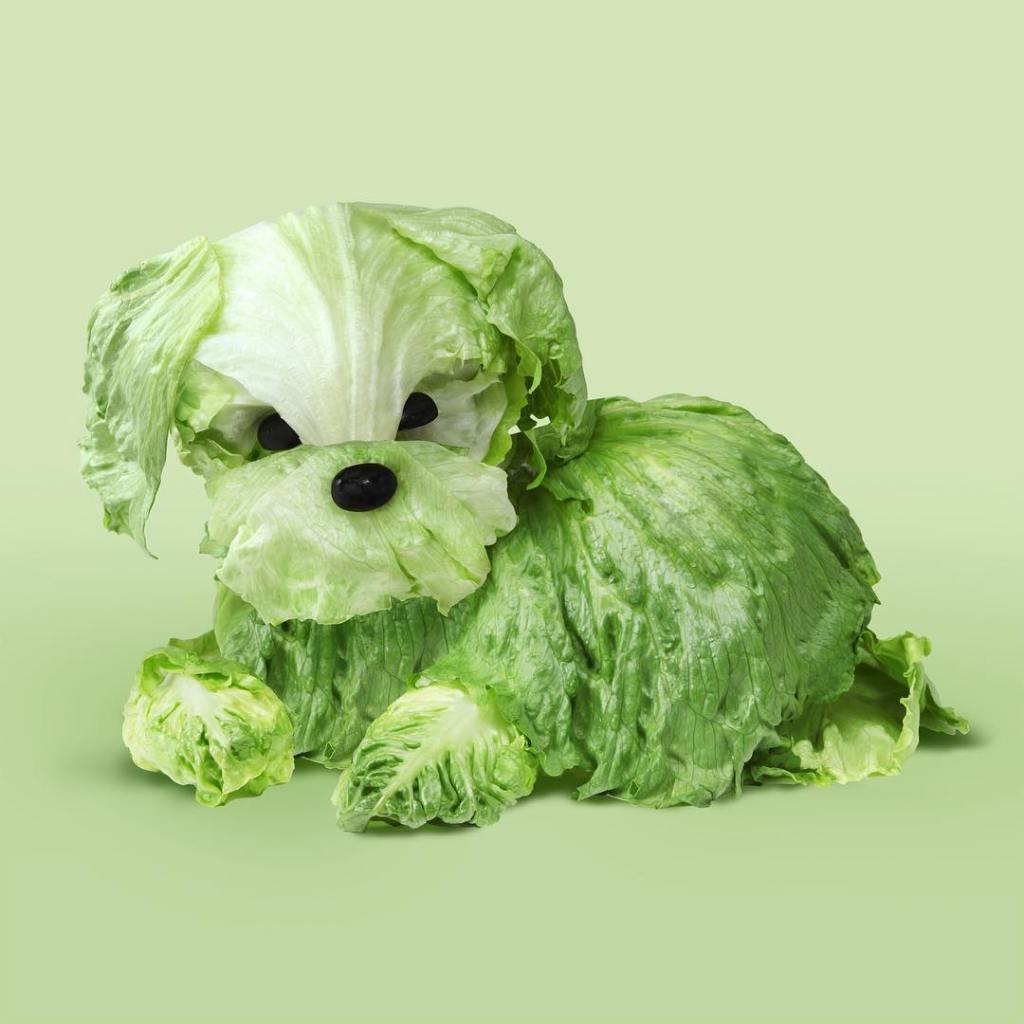 Dog Made Out of Lettuce Helga Stenzel