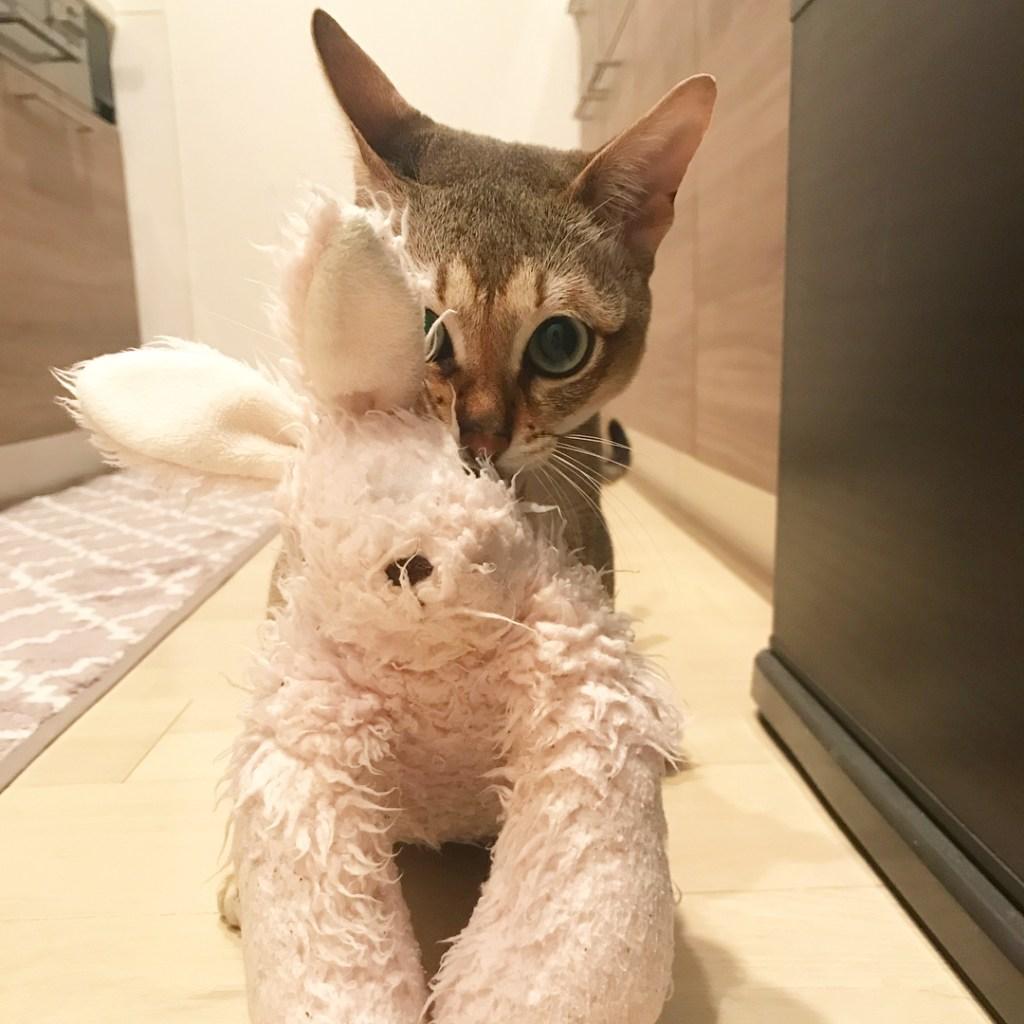 Malt and His Bunny Buddy