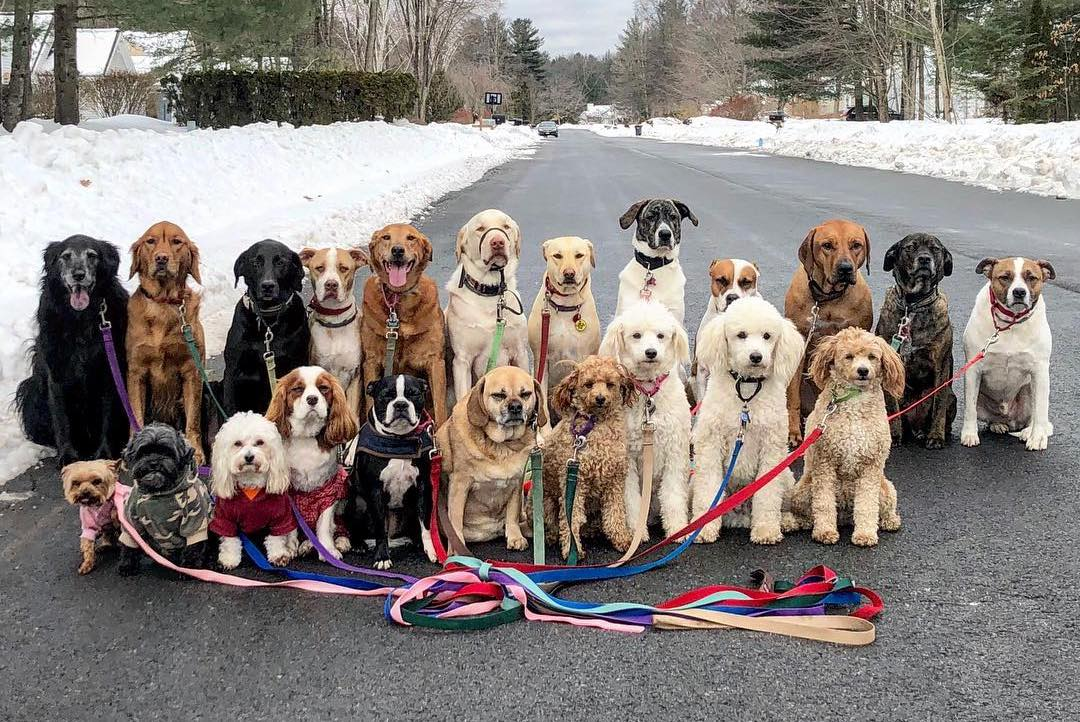 Adorable Group Photos of Dogs Who Pack Walk Together Every Day in Saratoga Springs, New York