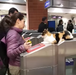 Cat Watches Commuters