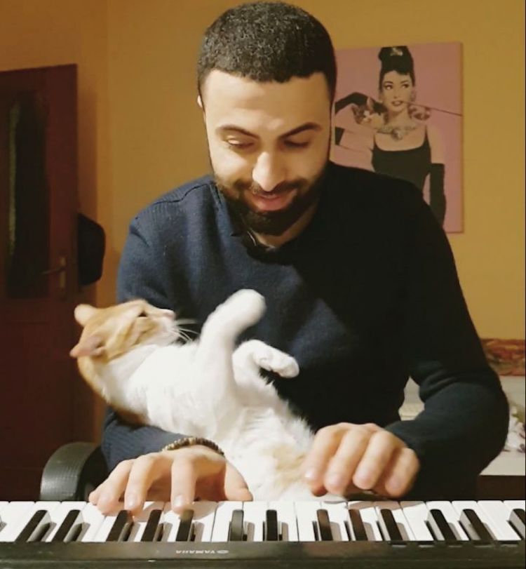 Affectionate Rescued Cat at Piano With Human Lullabye