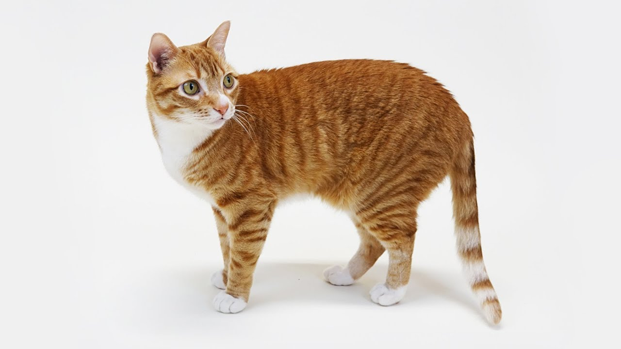 Cats Cole, Marmalade, Jugg and Zig Zag Helpfully Provide Amusing Examples of Cat Anatomy in Real Life