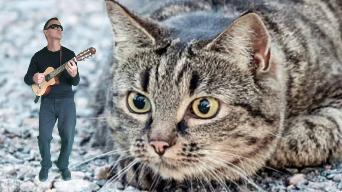 One Way or Another Tabby Cat