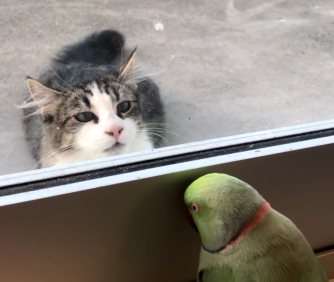 A Cheeky Parrot Plays Peek-a-Boo With a Neighbor's Cat With the Safety of a Glass Door Between Them